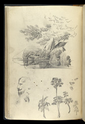 Miscellaneous pencil drawings, mainly studies of trees. 44v